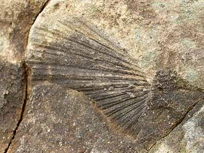 Jak přesná je fosilie datování