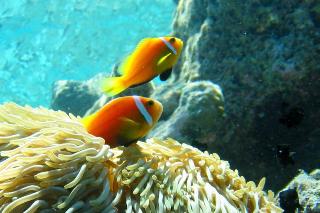ryby pro datování