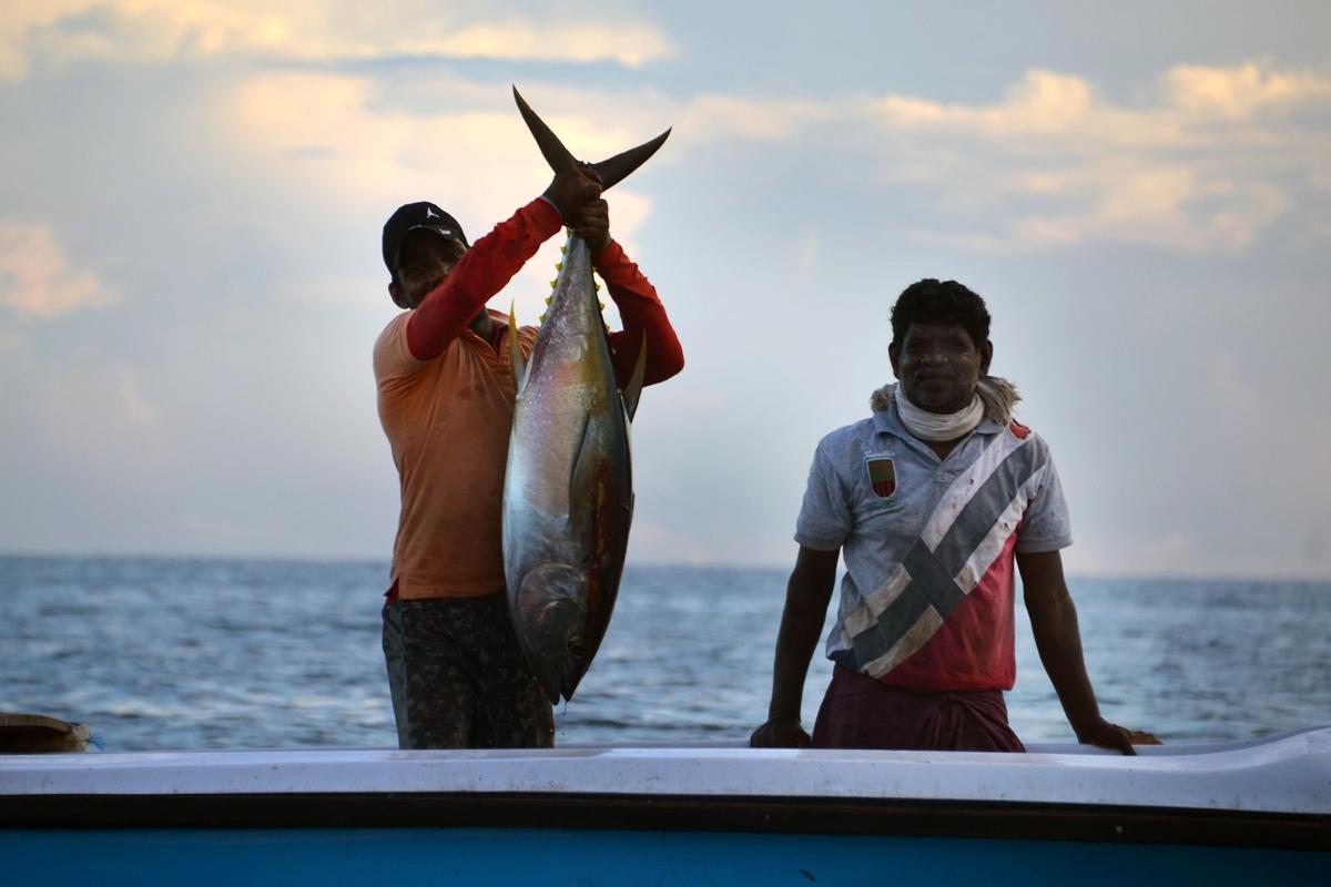 rybolov, rybáři, tuňák, ryba