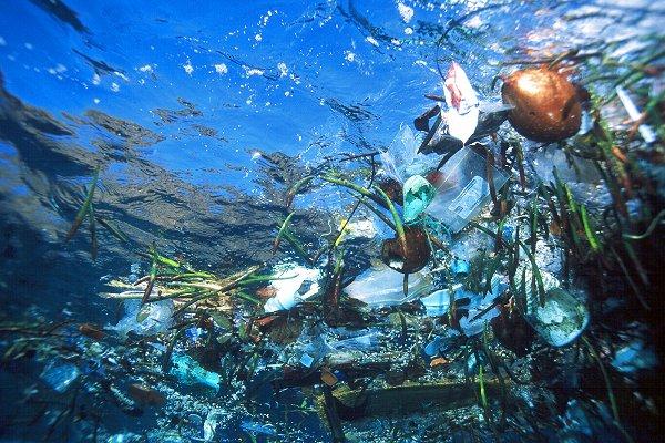 Odpadky v moři - plast v moři