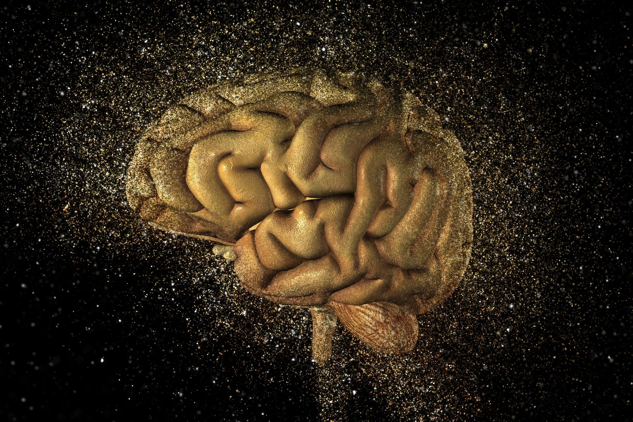 Lidský mozek (ilustrační foto)