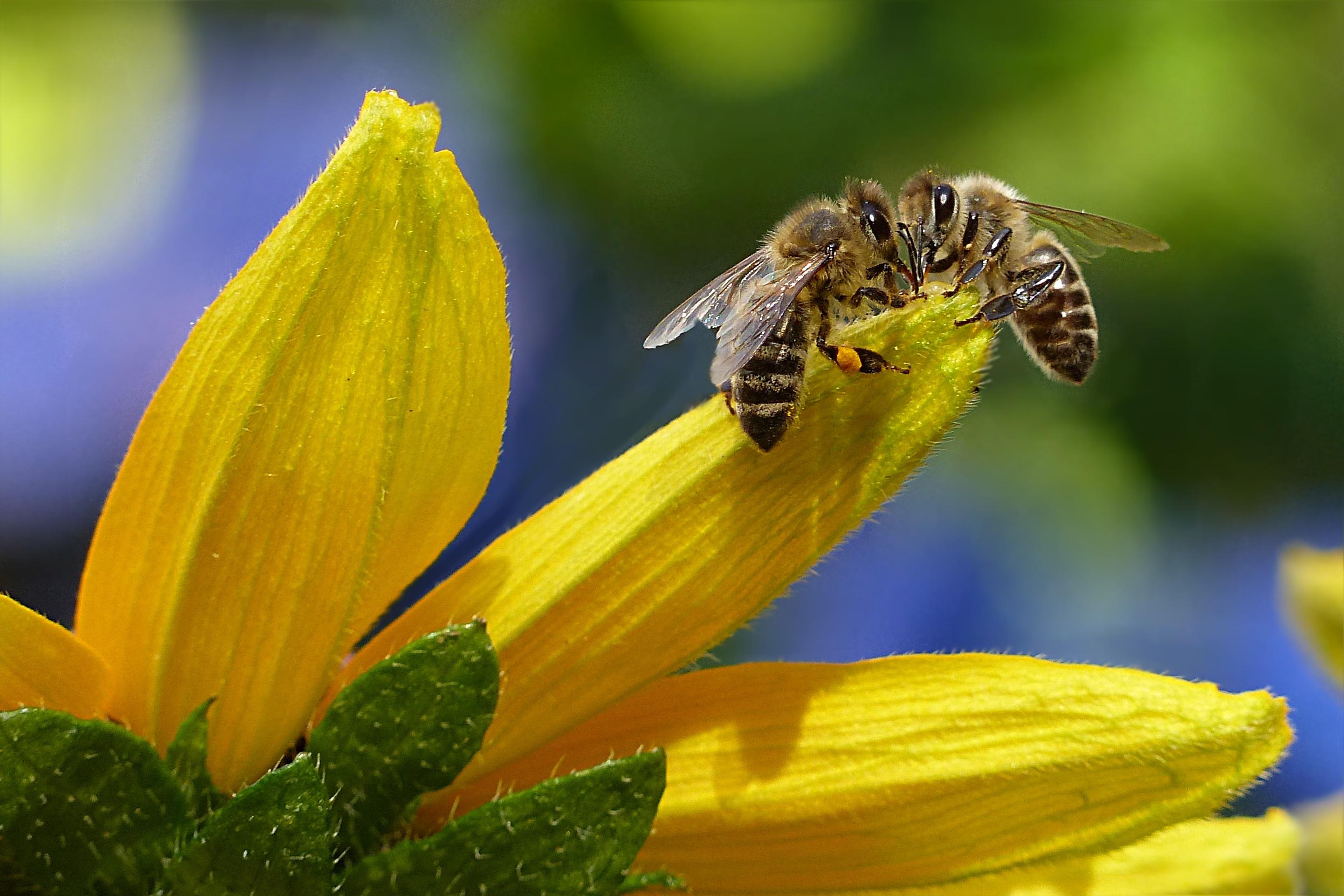 Včela - včely