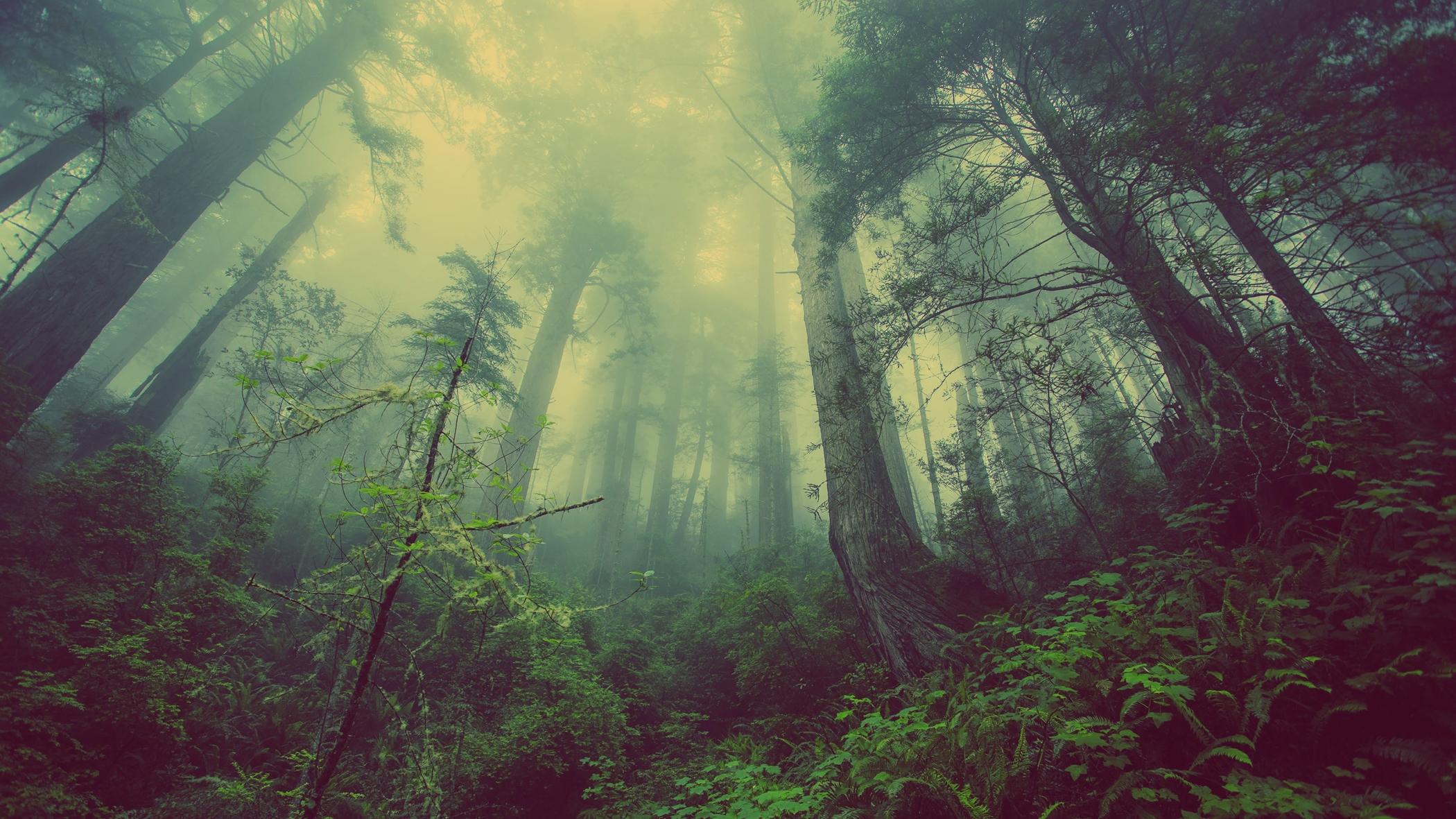 Stromy - les - prales