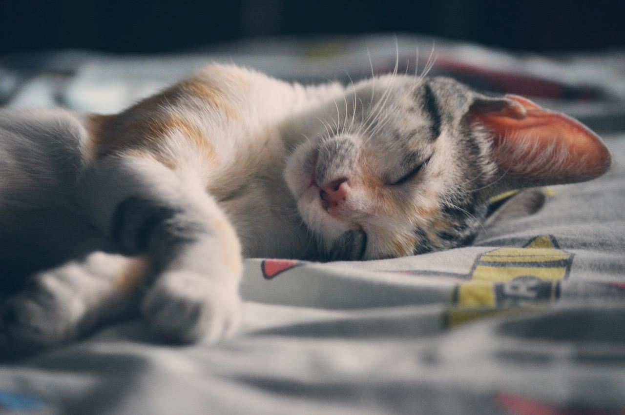 Nutnost uklízet v buněčném jádře je i odpovědí na zdánlivě naivní otázku, proč zvířata spí, i když tak riskují odhalení predátory.