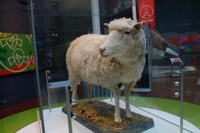 První klonovaný savec ovce Dolly je dnes k vidění v Národním skotském museu v Edinburghu