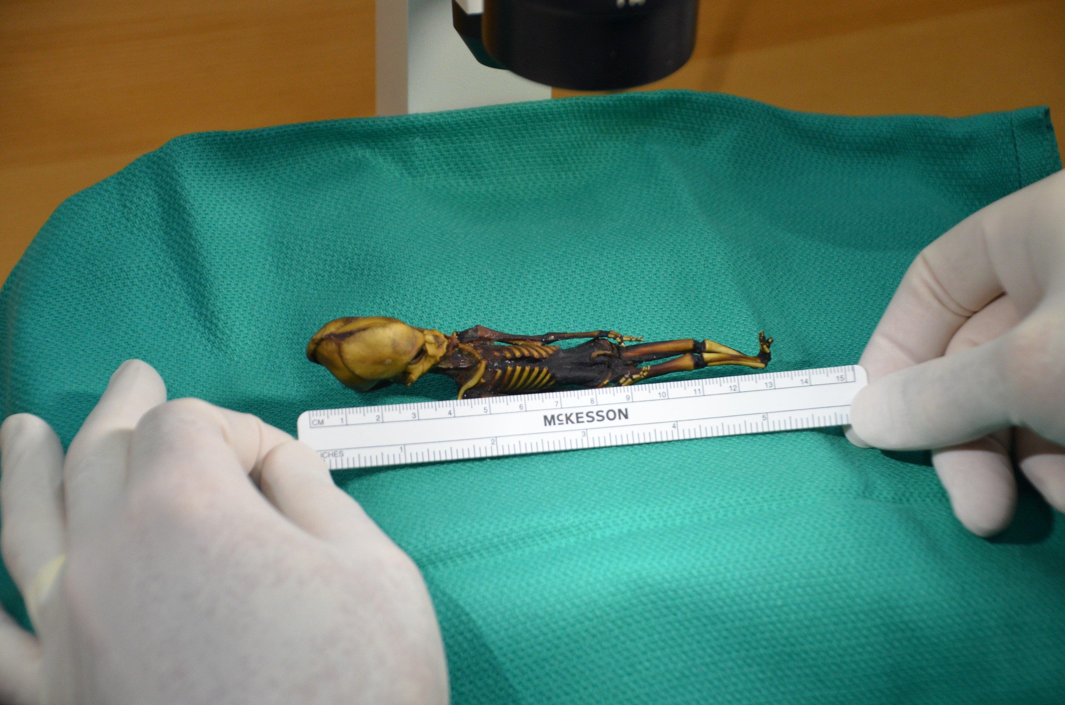 Mumie Ata