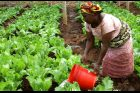 Zemědělství v Africe