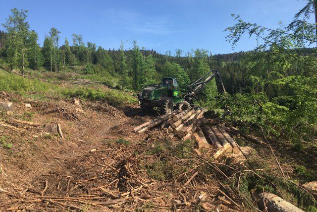 Lesníci sbírají pokácené dřevo v lese