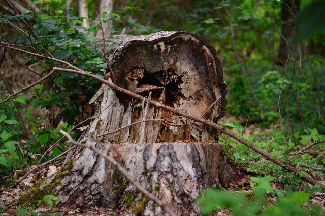 Poškozený strom - les