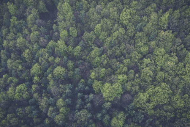 Evropský soud hrozí Polsku pokutou 100 tisíc eur denně za kácení Bělověžského pralesa | foto: Markus Spiske, CC0 Public domain