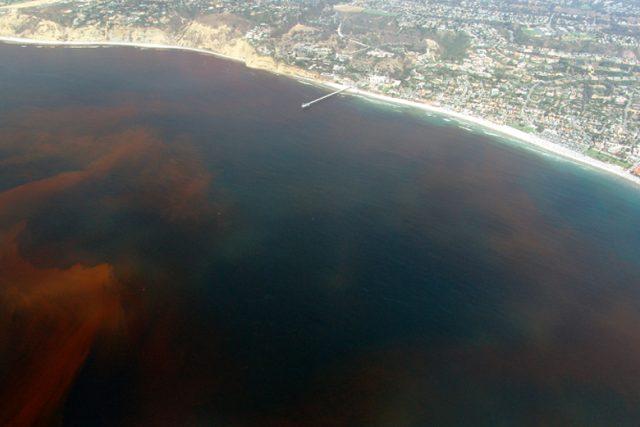 Rudý příliv u pobřeží Kalifornie