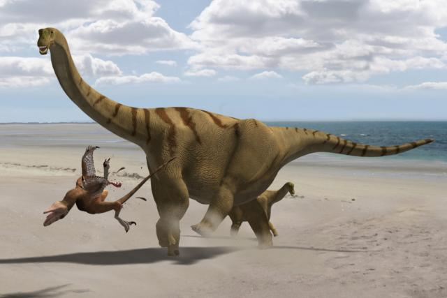 Dlouhokrký býložravý dinosaurus Brontomerus mcintoshi