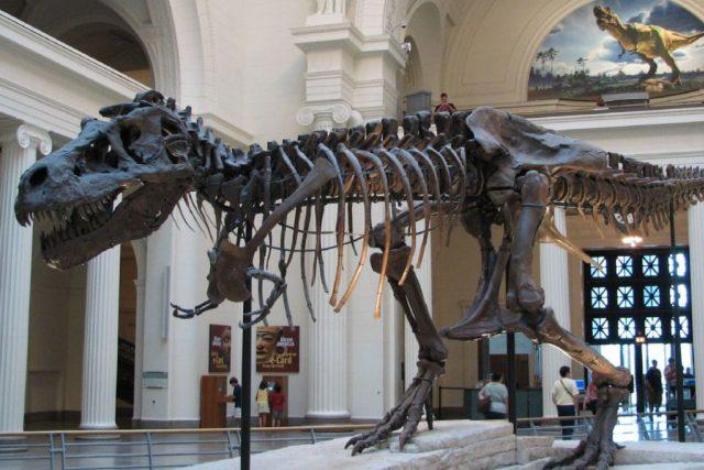 Největší kostra tyranosauří samičky Sue z přírodovědeckého muzea Field v Chicagu