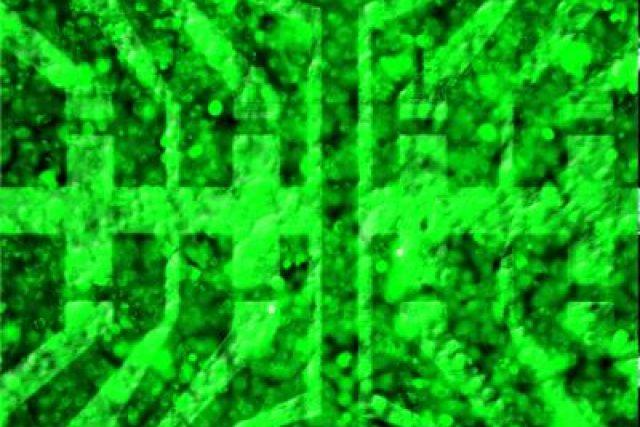 Vrstva biologických buněk pokrytá polem tranzistorů na bázi grafénu na snímku, který vznikl kombinací optické mikroskopie a fluorescenčního zobrazování.