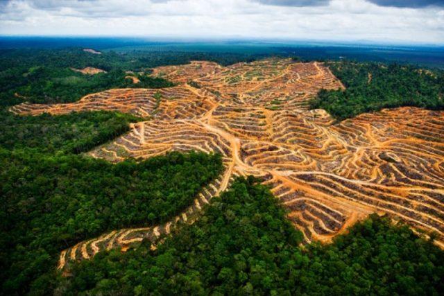 Plantáže palmy olejné v místech, kde býval tropický les