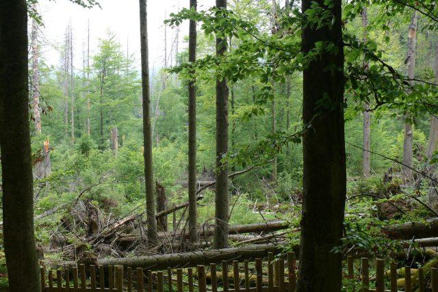 Les se musí sám vypořádat s následky orkánu Kirill, kůrovcem i jinými problémy