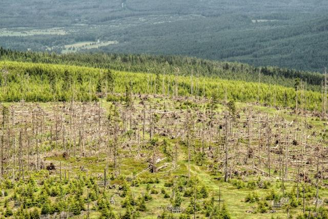 uschlý les