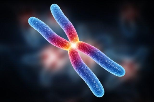 Chromozom  (ilustrační foto) | foto: Free Digital Photos