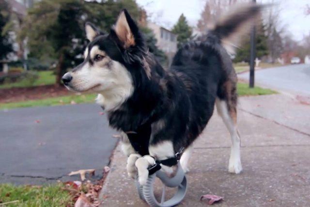 Derby a jeho speciální protézy