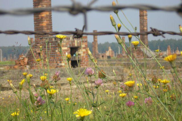 Zbytky baráků v koncentračním táboře Osvětim