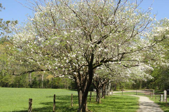 Jarní příroda (ilustrační foto)