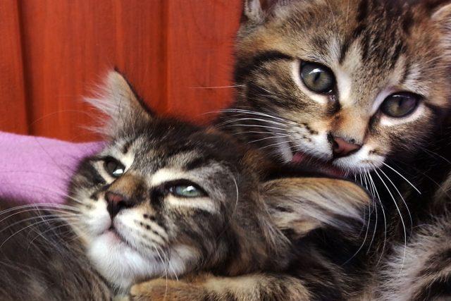 kočky, koťata