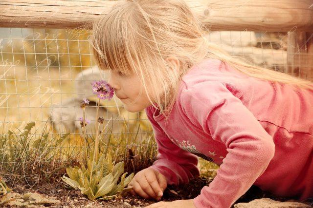 Dívka vonící ke květině | foto: Fotobanka Pixabay,  CC0 1.0