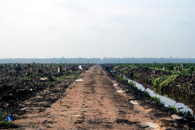 palmový olej, kácení pralesů