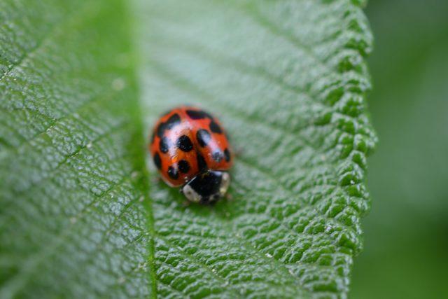 Květiny, traviny, stromy a keře jsou důležité pro hmyz