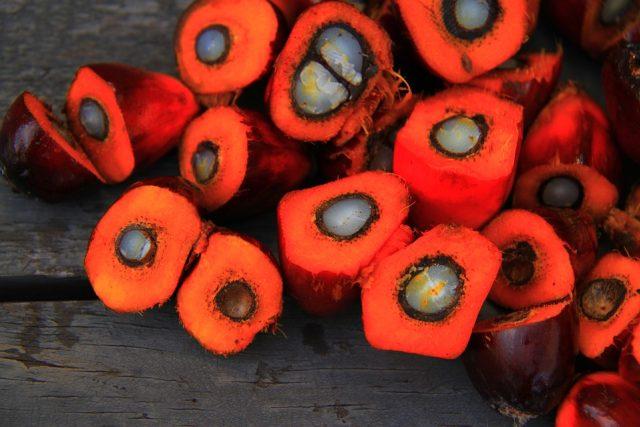 Palmový olej je získáván z oplodí palmy olejné