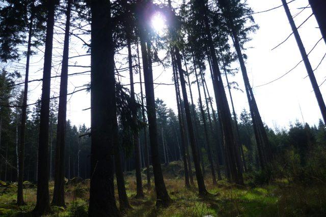 Les u Ranska, Havlíčkobrodsko