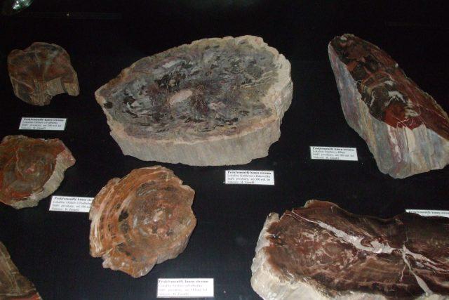Krása zkamenělého dřeva