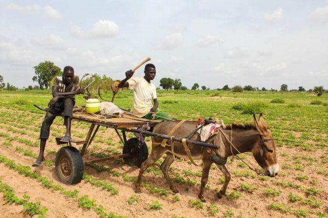 Zemědělství v Africe | foto: flickr.com   ,   World Bank Photo Collection,   CC BY-NC-ND 2.0