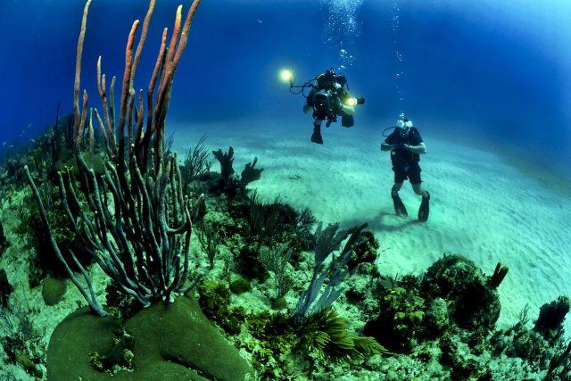 potápění, potapěč, moře, oceán, korálový útes