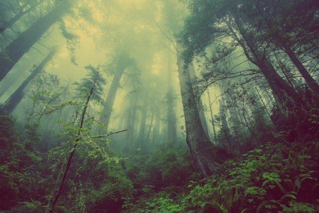 Dnes rostliny a půda po celém světě absorbují zhruba čtvrtinu skleníkových plynů,  které lidé uvolňují do atmosféry,  a pomáhají tak Zemi vyhnout se některým z nejhorších účinků klimatických změn | foto:  CC0 License