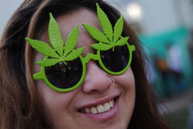 Marihuana - konopí - tráva
