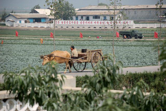Zemědělství v KLDR