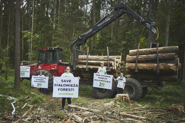 V polském Bělověžském lese se kácí kvůli kůrovci | foto:  Greenpeace,   CC BY-ND 2.0