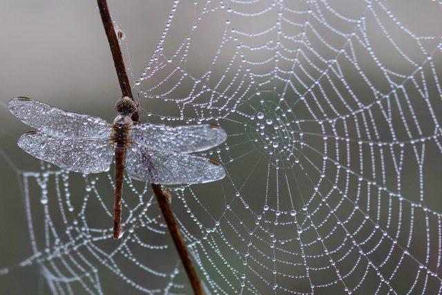 Pavučina - krásná past | foto: Fotobanka Pixabay