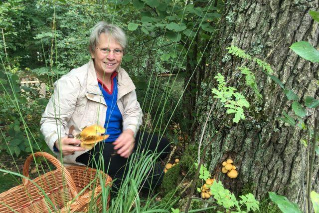 Mykoložka Libuše Kotilová žije na Třeboňsku. Právě zde jsou podle ní ideální podmínky pro růst hub