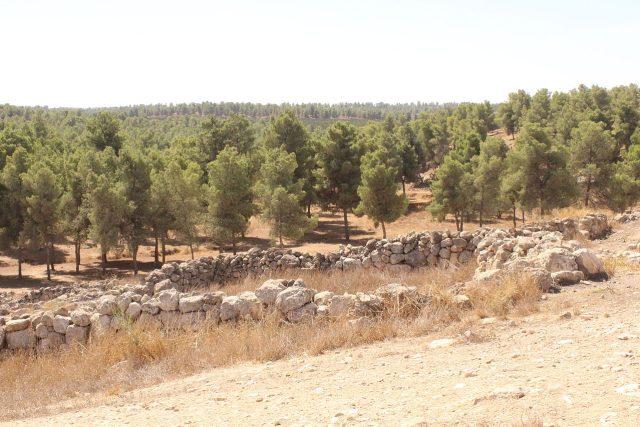 Yatirský les tvoří převážně borovice.
