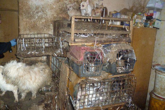 Psi v nevyhovujících podmínkách,  Kamenice nad Lipou | foto:  Státní veterinární správa ČR