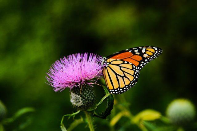 Motýle (ilustrační foto)