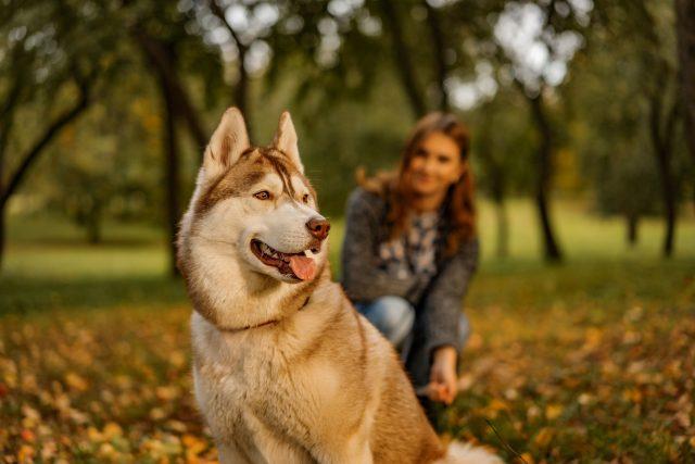 Žena a pes,  ilustrační foto | foto: Profimedia