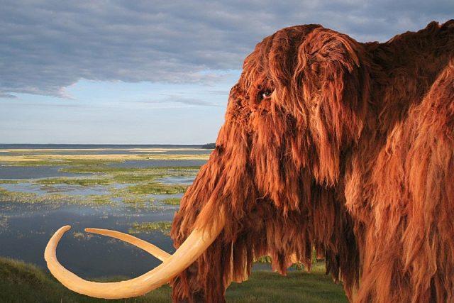 Mamut v Muzeu mamuta
