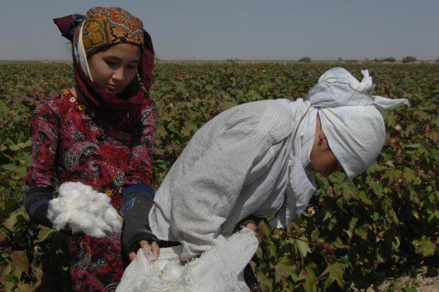 Sběr bavlny v indickém Gudžarátu