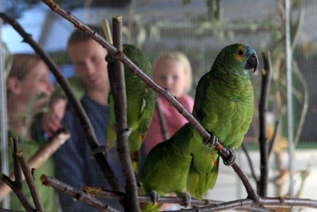 Papoušek amazoňan modročelý. Přezdívá se mu Mojžíš