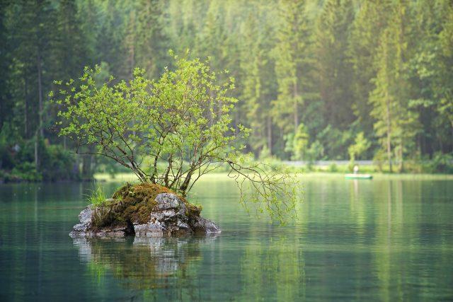 Voda, řeka, stromy. les, ostrůvek, krajina, příroda