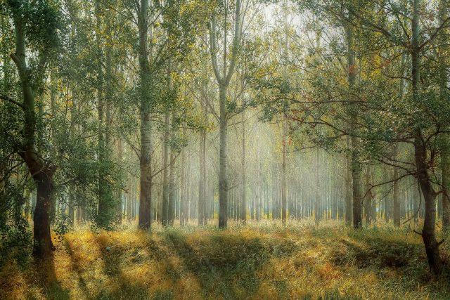Potřebujeme odolný les (ilustrační foto)