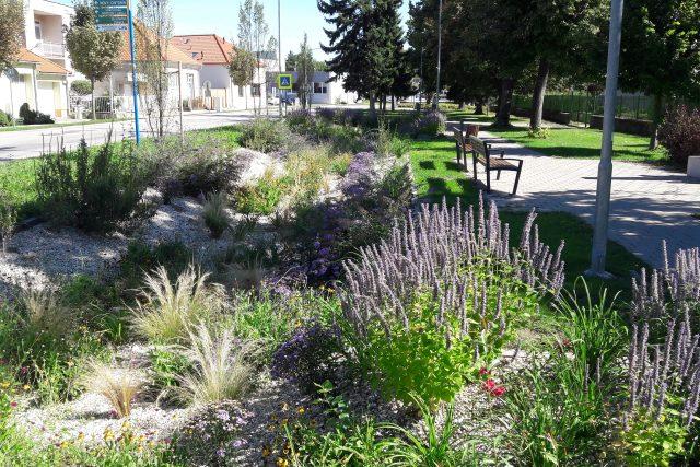 Dešťová zahrada u školy